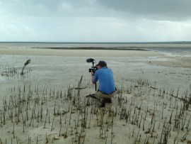 "Videographer Matt McCoy of Loggerhead Productions ""stalking"" piping plovers"