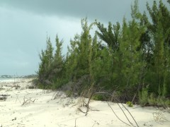 Casuarina on Treasure Cay Beach, Abaco, Bahamas