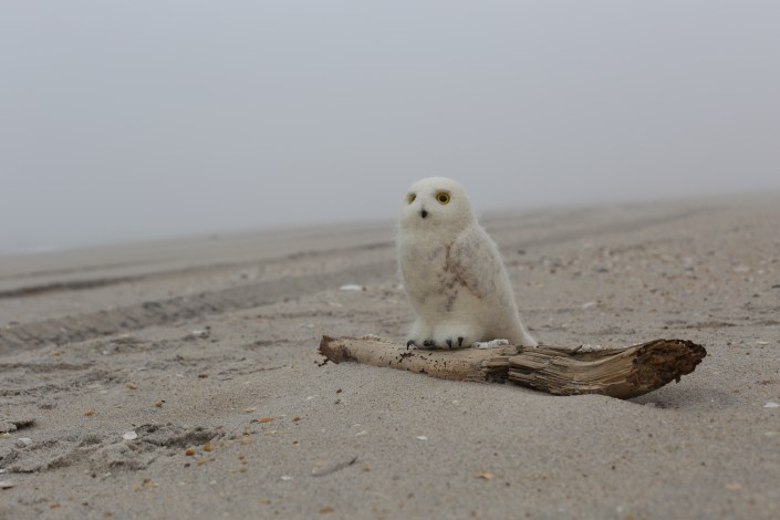 A Stuffed Owl hunts a desolate beach.