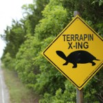 Terrapin X-ING sign along Great Bay Blvd. Photo courtesy of Ben Wurst.