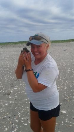 Lindsey Brendel getting up close and personal with American oystercatcher chick, one of several beach nesting bird species she monitored this summer.