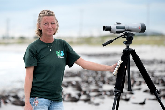 Laura Hardy, one of the blog authors, pauses as she attempts to count a colony of several thousand black skimmers. Photo by Donna L. Schulman.