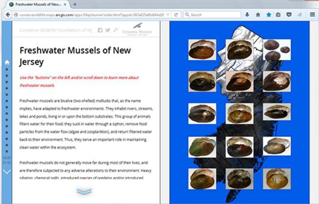 Musselscreenshot