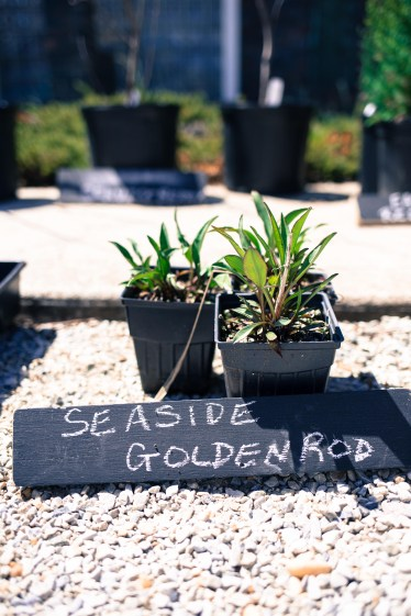 Reclaimed wood was used to make signs for the plants.