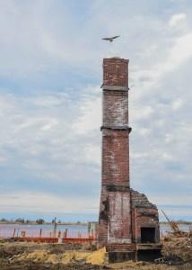 Osprey builds nest on chimney. Photo by Kevin Knutsen.