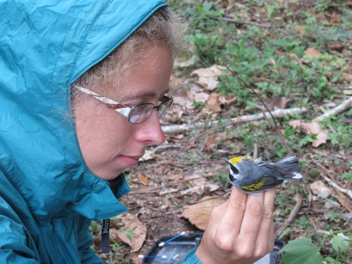 Ruth Bennett, studying GWWA in their wintering habitat, with a recently banded Golden-winged Warbler Photo by Mayron Mejia