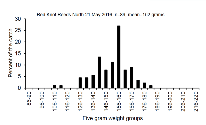 This histogram shows the number of red knots in each weight category in our catch made on May 21. See text for more explanation.