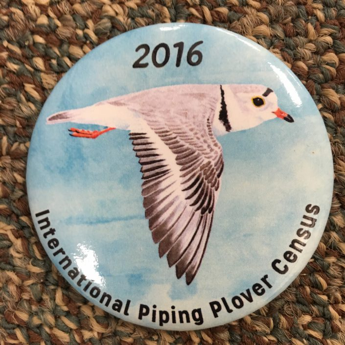 After helping with the winter segment of the International Piping Plover Census in the Bahamas, CWF switched gears this week to help conduct the breeding portion in New Jersey.