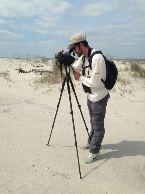 CWF Field Technician Jesse Amesbury busy conducting annual piping plover census at Edwin B. Forsythe NWR.