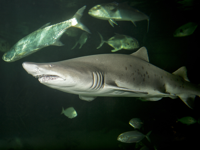 Fish Conserve Wildlife Foundation Of New Jersey