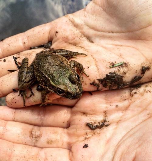 "Youth Third Place Winner Edana Lobosco ""Frog in Hands"""