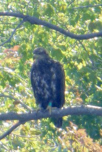 "D/95 ""Nacote"" at Tuckahoe Lake 7/21/16@ Kathy Clark"