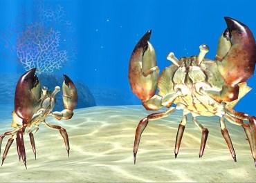 Sea Life Safari Review
