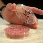 La viande in vitro, bientôt dans nos assiettes ?