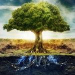 La microbiologie des sols (Claude Bourguignon)