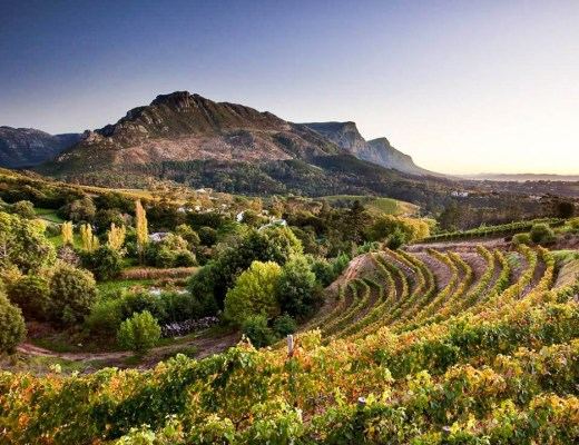 9 Constantia Wine Farms for Every Traveler