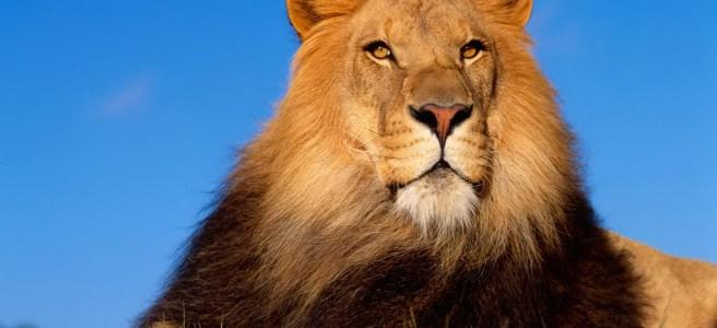 Solo con un leone alle calcagna probabilmente!