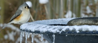 best heated birdbath