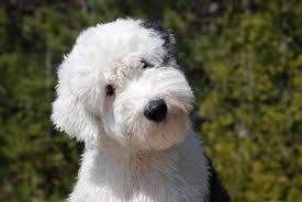 Thinking Dog!