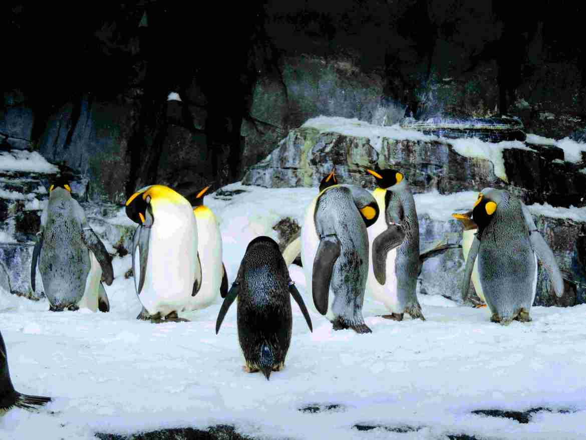 Empire of the Penguin - SeaWorld