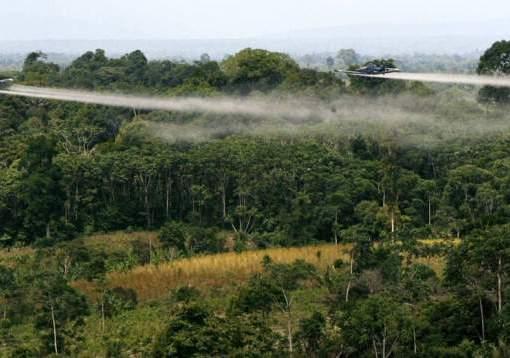 Campesinos del Catatumbo irían a paro si se reactivan fumigaciones con glifosato