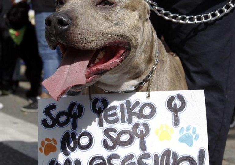 Pólizas de nuevo Código de Policía provocan abandono y sacrificio de perros