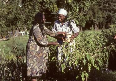 Las Mujeres tejen paz desde los territorios