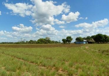 Informe sobre acumulación de baldíos se quedaría sin piso si se aprueba ley de tierras