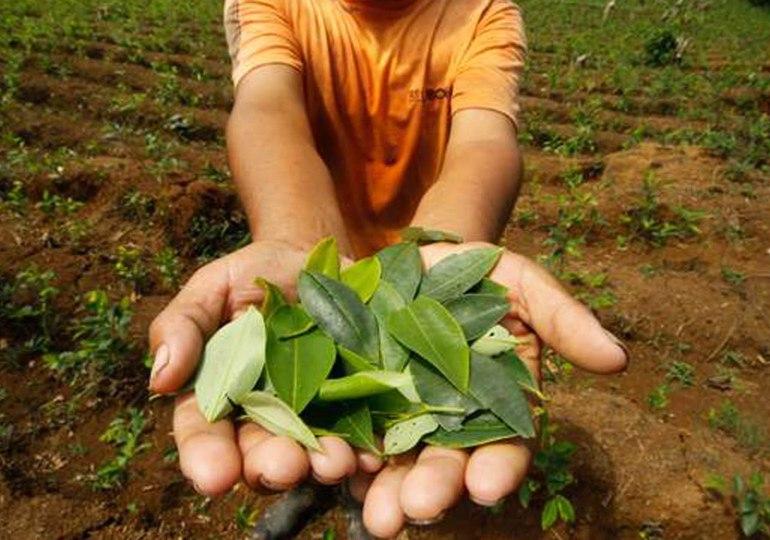 En Putumayo el Estado ha dilatado plan de sustitución de cultivos de uso ilícito