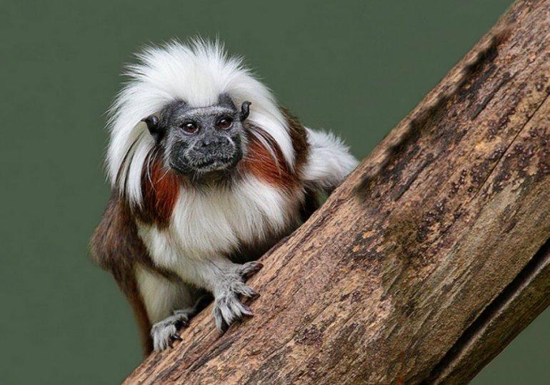 Más de 2700 especies de fauna y flora en peligro por la deforestación en Colombia