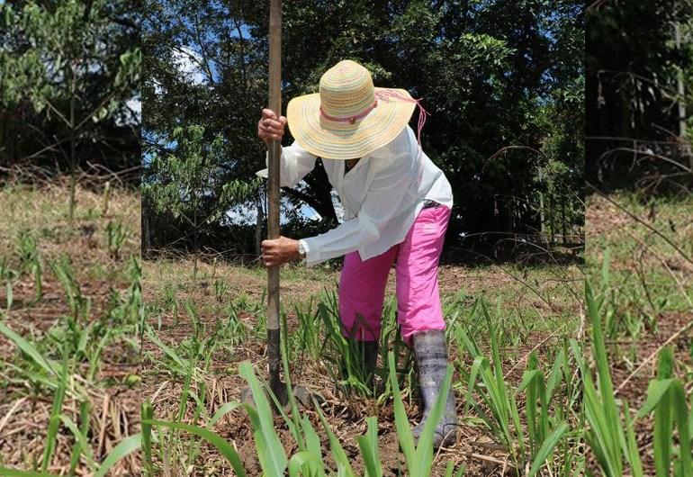 Campesinos del Catatumbo continuaran en movilización escalonada