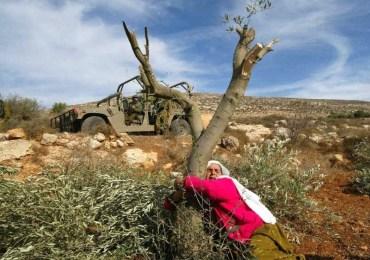 La tierra, el cuerpo y las mujeres palestinas