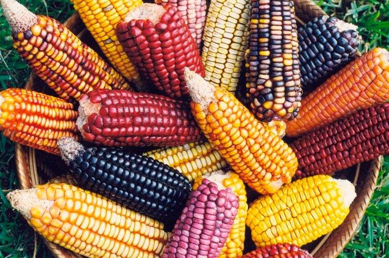 """""""Reforma Rural Integral debe proteger semillas nativas"""""""