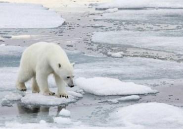 6ta era de extinción masiva de especies es causada por los humanos