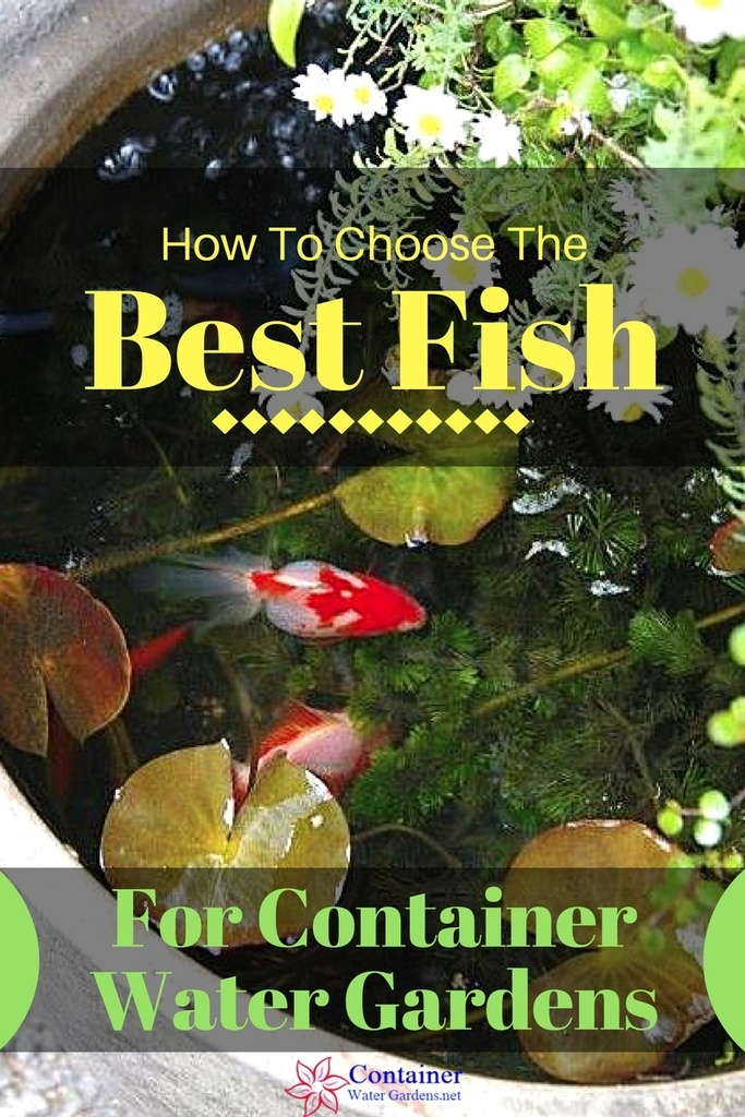 Best Floating Pond Plants