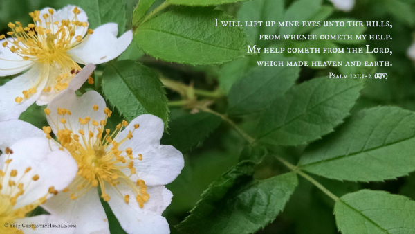 I will lift up mine eyes unto the hills, from whence cometh my help.  My help cometh from the Lord, which made heaven and earth. Psalm 121:1-2 (KJV)