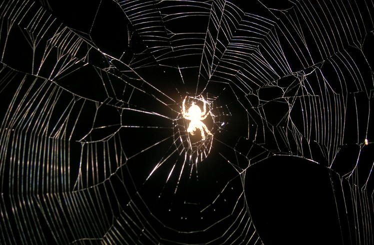 Glowing Spider in Web