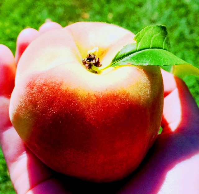 Peach - How to Crave Healthy Foods