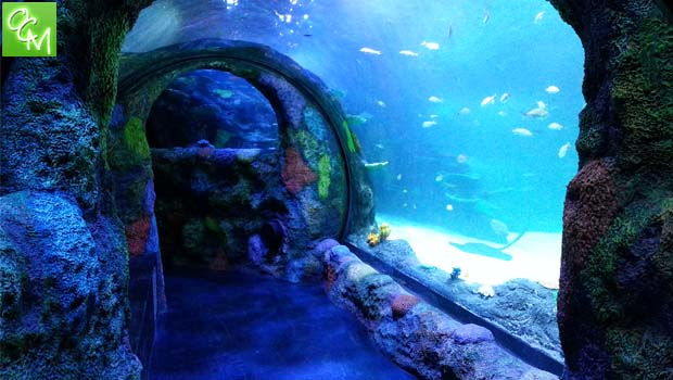 Sea Life Michigan Tickets Contest – Win 4 Tickets for Free Admission