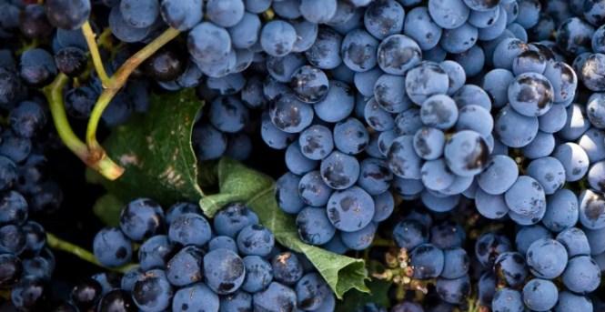 M. Shanken Communications Wine Spectator Top 100 Sweepstakes