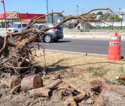 Detendrán tala de árboles en construcción de puente en Irrigación.