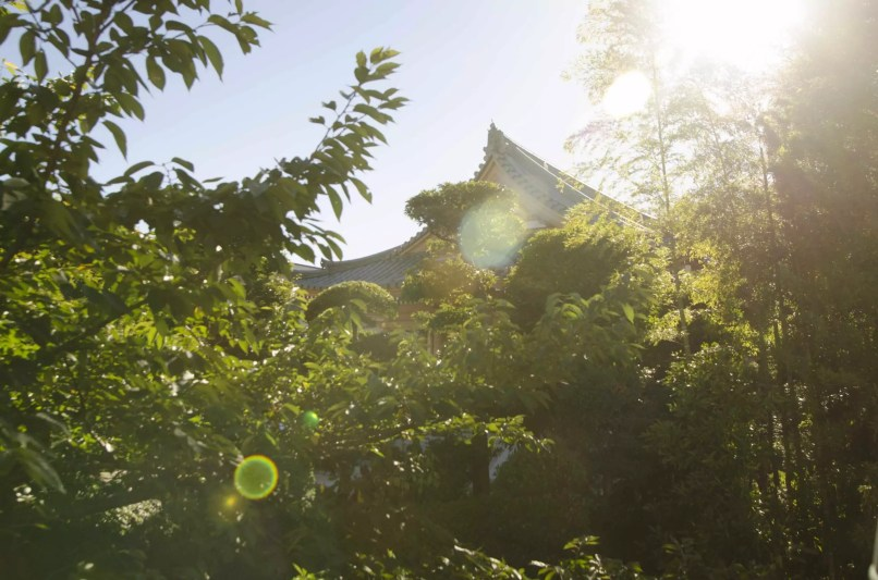 Tokyo Attraction: A Temple in the City