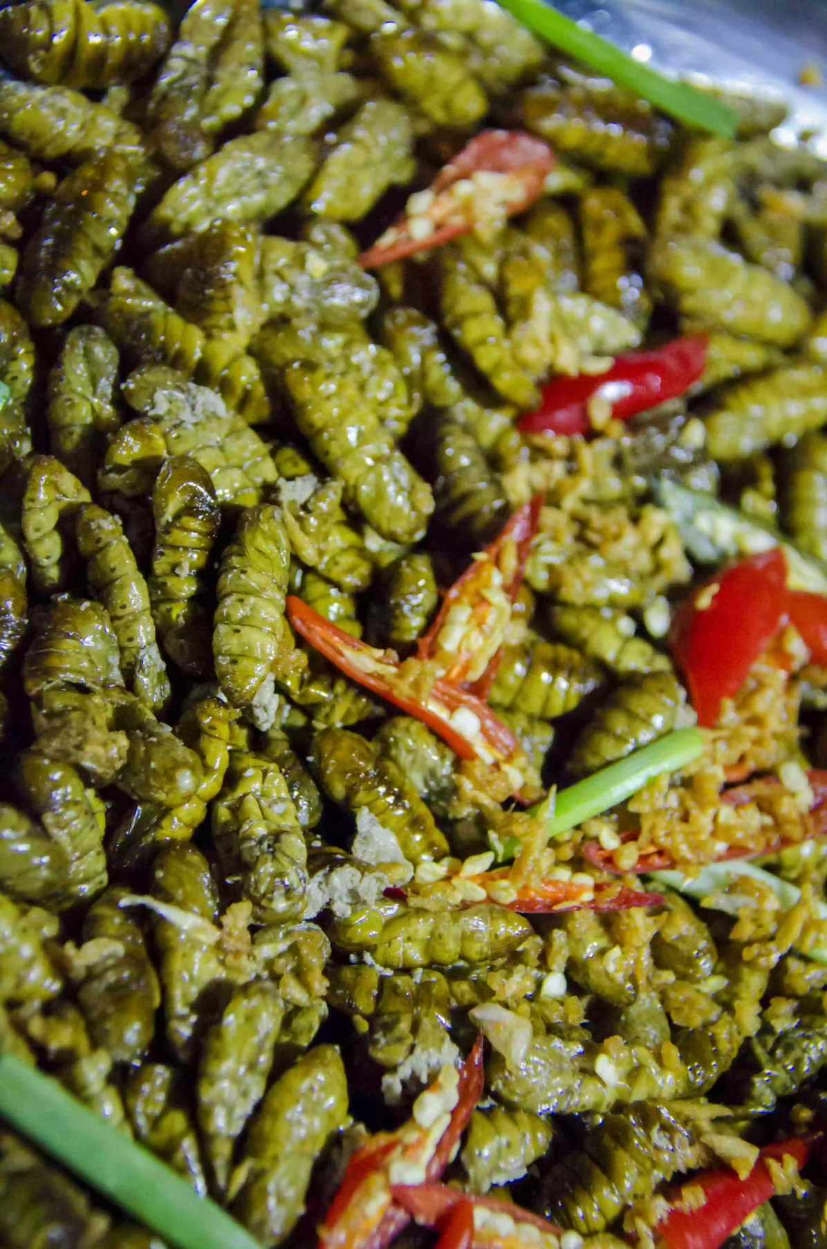 Eating Insects: Maggots