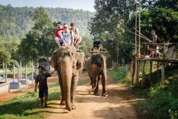 Elephant rides and tiger temple - Animal cruelty and tourism