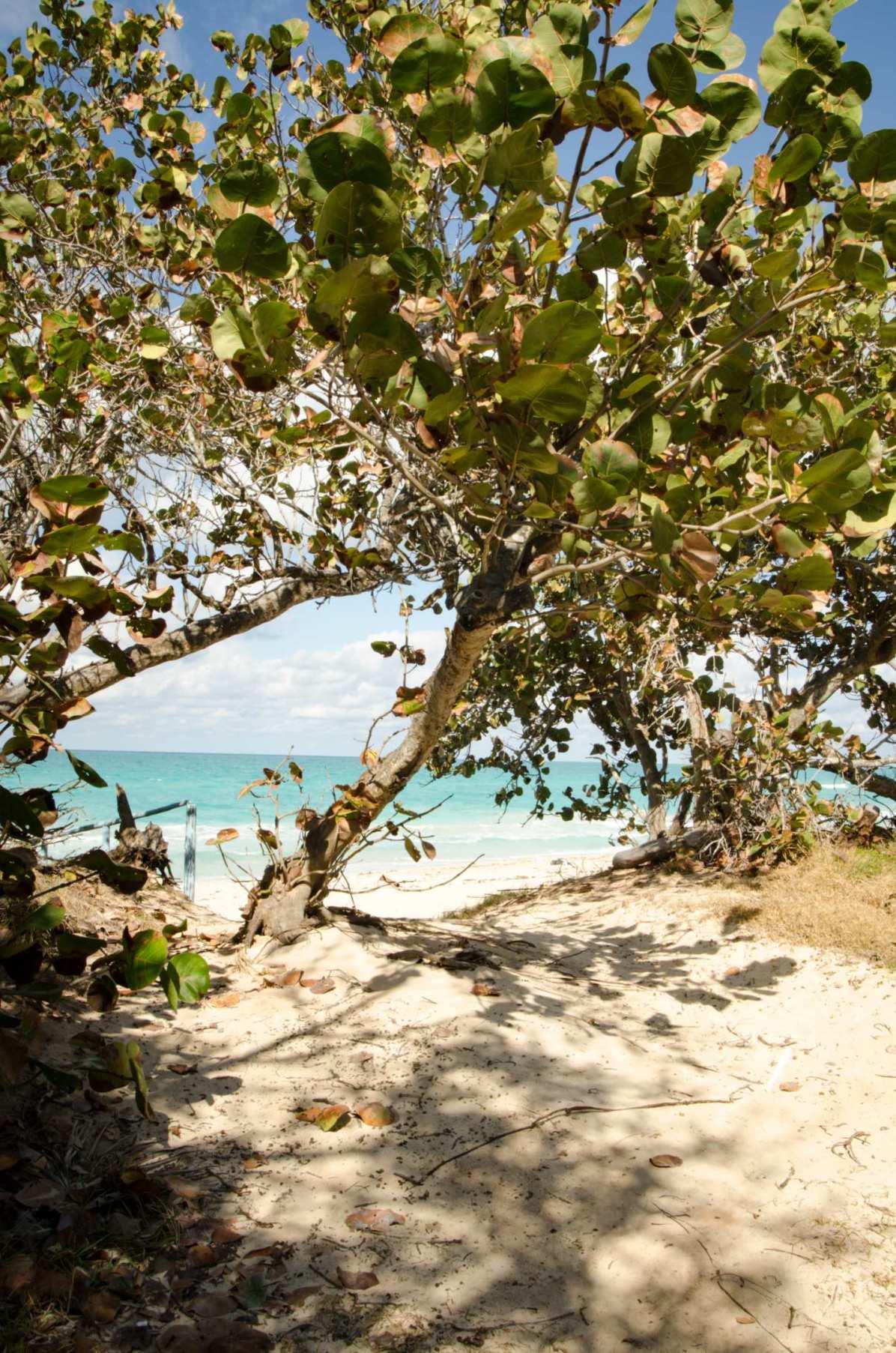 Voyager pas cher - Quand notre voyage annuel principal, c'est cinq jours à Cuba...