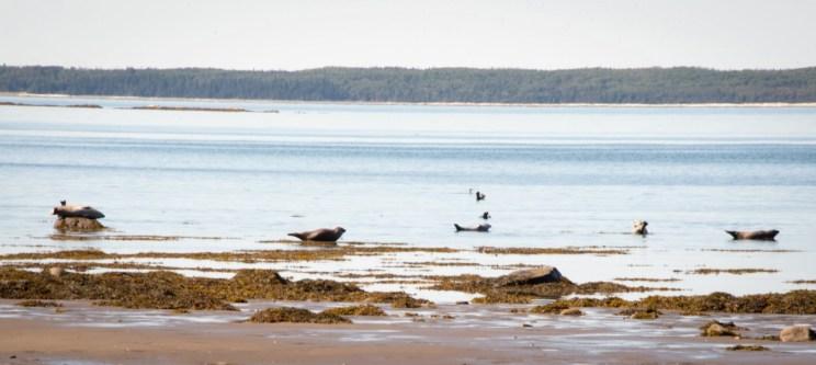 Roadtrip dans le Bas-St-Laurent: Des phoques dans le parc national du Bic