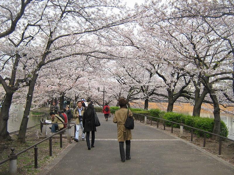 free things to do in Tokyo - Sakura Season at Ueno Park - photo by Gavin Anderson under CC BY-SA 2.0