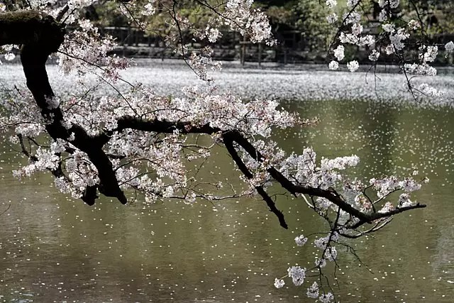 free things to do in Tokyo - the pond at Inokashira Park - photo by KimonBerlin under CC-BY-SA-2.0