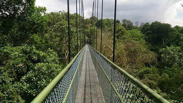 TreeTop Walk at MacRitchie Reservoir - photo by Mokkie under CC-BY-SA-3.0