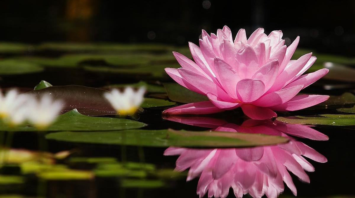 Resultado de imagem para flor